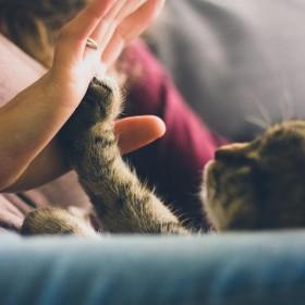 Why Cat Furniture?