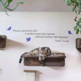 Accessorizing Your Cat Furniture