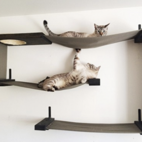 Go Vertical with Cat Wall Shelf Systems