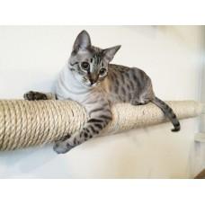 Wall-mounted Sisal Cat Pole - Horizontal Runway